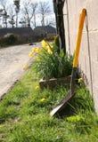 Żółty wiosna Obraz Royalty Free