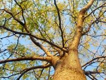Żółtych gałąź Przyglądający Up zdjęcie royalty free