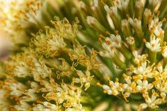 Żółtych i białych kwiatów tekstura Obraz Royalty Free