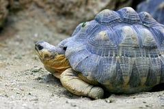 żółw fotografia stock