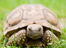 żółw Zdjęcie Stock