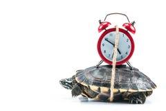 Żółw i czerwień zegar obrazy royalty free