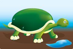 żółw mokry Zdjęcia Royalty Free