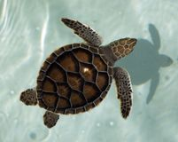 żółw morski obrazy stock