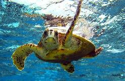 żółw morski fotografia stock