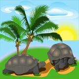 Żółw na wyspie Zdjęcie Royalty Free