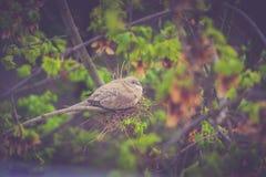 Żółw nurkuję gniazdować Obraz Royalty Free