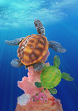 żółwi. Fotografia Royalty Free