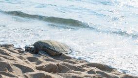 Żółwia dosypianie Obrazy Stock