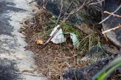 Żółwia lub tortoise sucha skorupa łamająca obraz stock