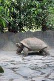 żółwia prague zoo Zdjęcia Stock