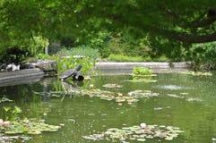 Żółwia stawu, Wilmington arboretum Obrazy Royalty Free