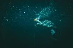 żółwia underwater Obraz Stock