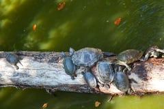 żółwie zdjęcia royalty free