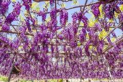 Żałość kwiat Fotografia Stock