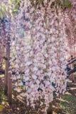 Żałość kwiat Fotografia Royalty Free