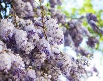Żałość kwiaty z otwarcie zieleni tłem obrazy royalty free