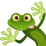 żaba ilustracji