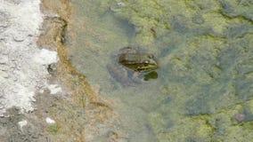 Żaba bawić się w wodzie zbiory wideo