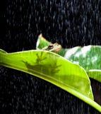 żaba deszcz obrazy royalty free