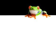 żaba granic Zdjęcia Royalty Free