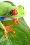 żaba pojedynczy liści Obrazy Royalty Free