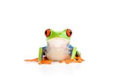 żaba pojedynczy white Fotografia Royalty Free
