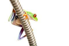 żaba występować samodzielnie metalowej rury Obraz Royalty Free