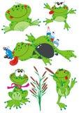 żaby śmieszne Fotografia Stock