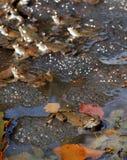 żaby fotografia royalty free
