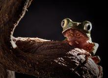 żaby blasku księżyca noc drzewo Zdjęcia Stock