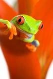 żaby chłodzących roślin Zdjęcie Royalty Free