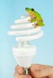 żaby lampa fotografia royalty free