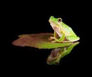żaby liść odbijający drzewo Zdjęcia Stock