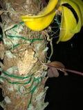 żaby na drzewie fotografia royalty free