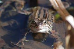 żaby patrzeć w górę zdjęcia stock