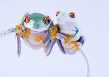 żaby sieci Zdjęcia Stock