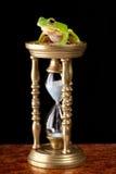 żaby szkła godzina zdjęcie royalty free