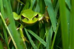 żaby trawy drzewo zdjęcie stock