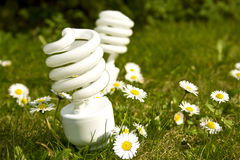 żarówek stokrotki energii pola oszczędzanie Obrazy Royalty Free