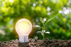 Żarówka z młodą rośliną dla energetycznego pojęcia stawia dalej ziemię Obraz Royalty Free