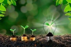 Żarówka z rośliną wśrodku ziemi biznes Pojęcie biznesowy pomysł obrazy royalty free