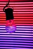 żarówki światła neon Zdjęcie Royalty Free