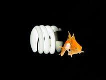 żarówki światło środowiskowy życzliwy Zdjęcie Royalty Free