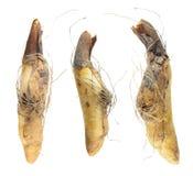 Żarówki, Erythronium californicum odizolowywający na bielu lub zdjęcia royalty free