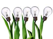 żarówki lampy tulipany Zdjęcia Royalty Free
