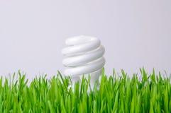 żarówki pojęcia środowiskowy dorośnięcia światło Zdjęcie Royalty Free