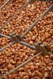 żarówki wprowadzać na rynek tulipanu Obrazy Stock