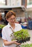 Żeńscy mień ziele w jej rękach fotografia stock