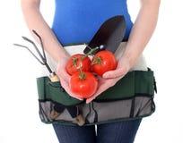 żeńscy ogrodniczki mienia pomidory Zdjęcia Stock
